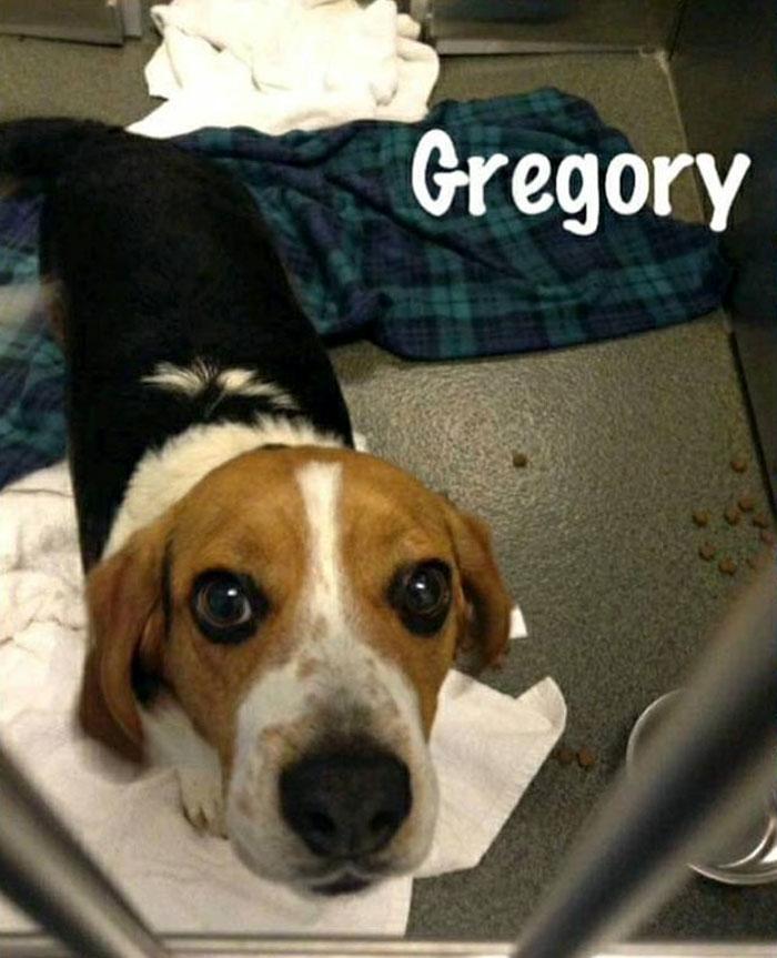 Appello per Gregory