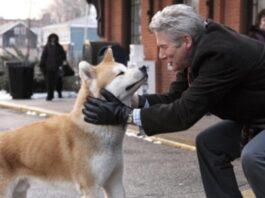 cane affezionato al padrone