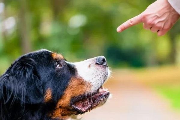 Come fare stare attento il cane (per poi addestrarlo)