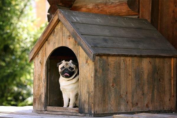 cane dentro cuccia all'aperto