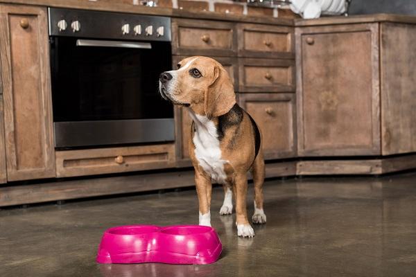 I cani possono mangiare i fagioli neri?