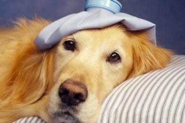 cane sta male