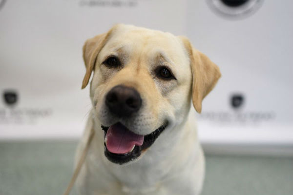 I cani possono mangiare le nespole?