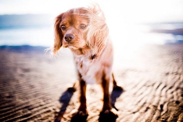 I cani possono mettere la protezione solare?