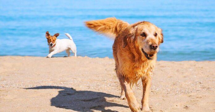 cani sotto il sole