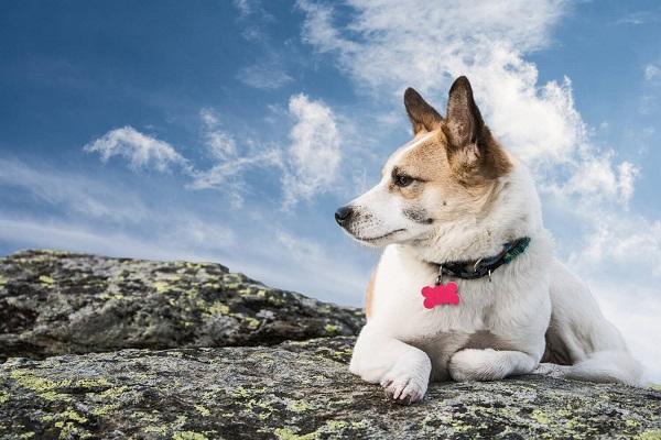 cane su roccia