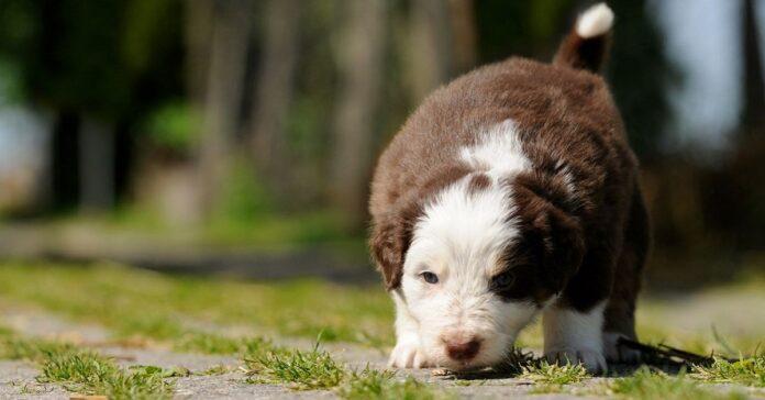 cane che annusa
