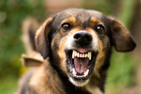 cane mostra i denti