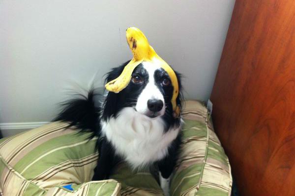 Il cane ha mangiato la buccia di banana: e ora?