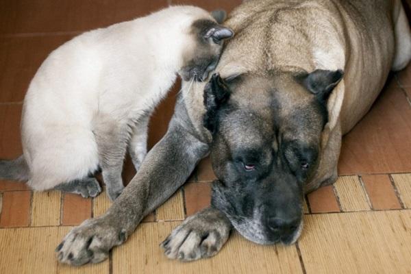 Il cane può avere le vertigini? Come lo si capisce?