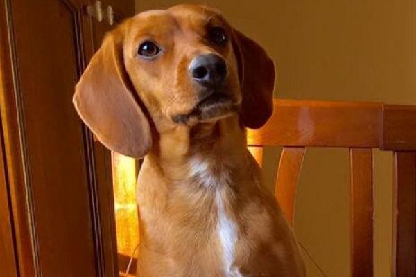 Il cane può mangiare la salsiccia (cruda e cotta)?