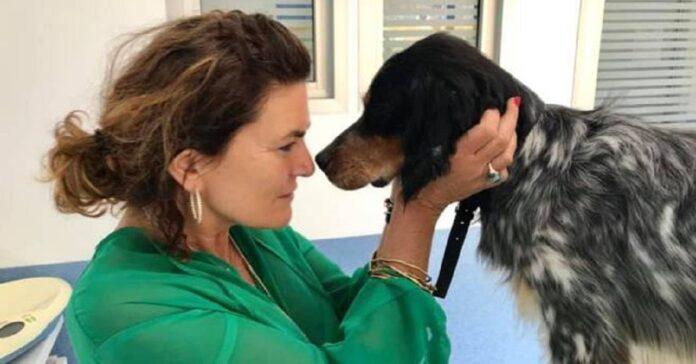 il-cane-salvo-prima-abbandonato-in-autostrada-e-poi-salvato-da-una-coppia