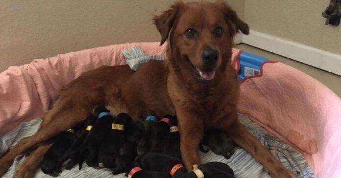 il-cane-viene-salvato-da-una-donna-darà-alla-vita-18-cuccioli