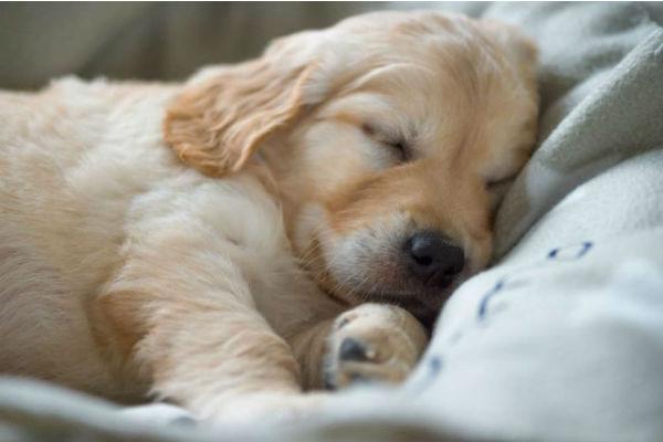 cucciolo di cane dove dorme