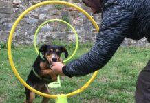 cane che salta attraverso il cerchio