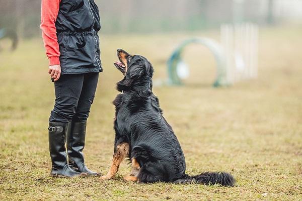 Come insegnare al cane a saltare attraverso un cerchio