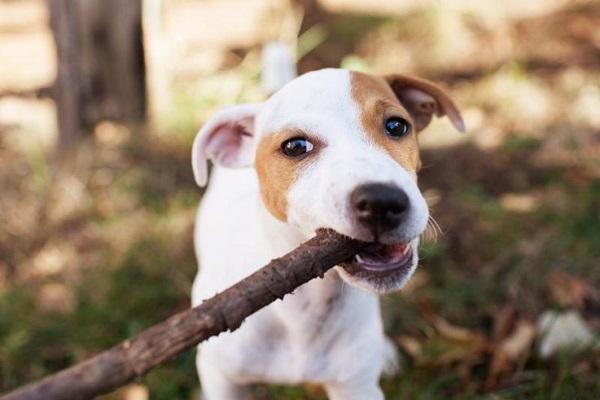 cane morde bastone