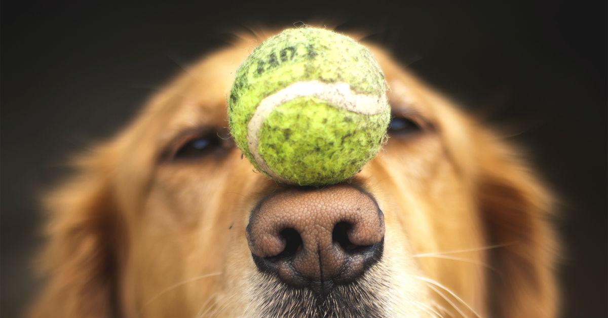 Risultato immagini per trucchi cane vecchio