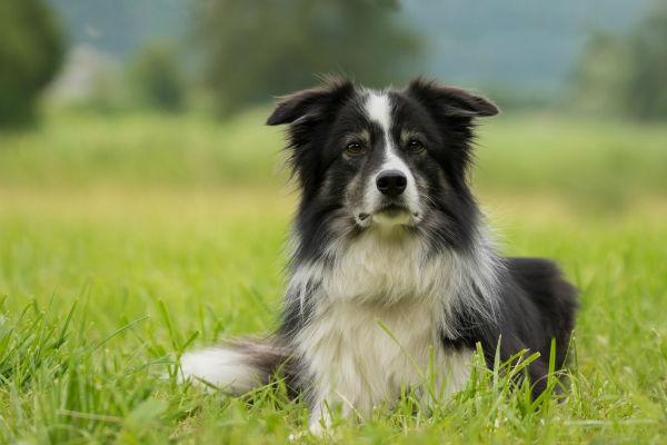 Istoplasmosi del cane: cosa sapere su questa malattia