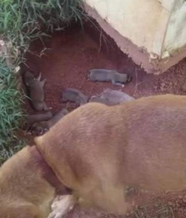 Cane nasconde i suoi 9 cuccioli per proteggerli dal proprietario