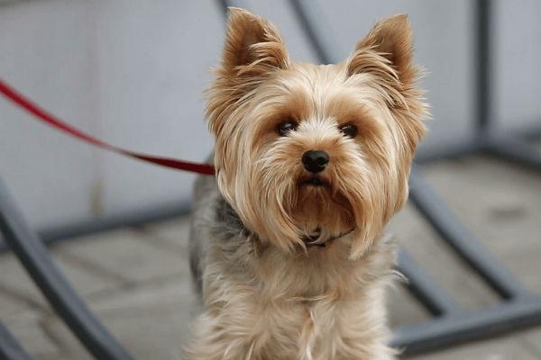 Parlare a un cane nervoso: trucchi per calmare Fido