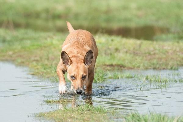 Perché i cani annusano in giro prima di fare cacca?