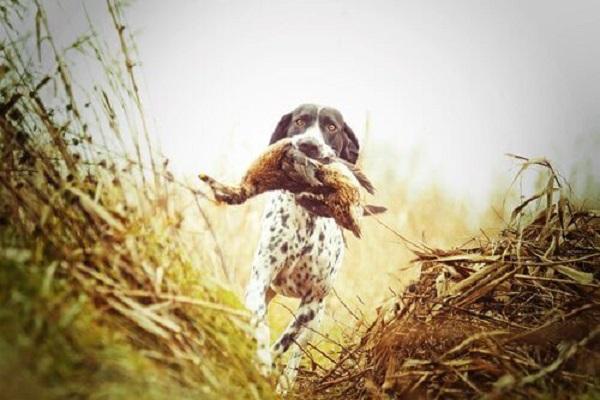 Perché i cani attaccano gli uccelli?