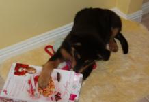 cane che mangia cartone