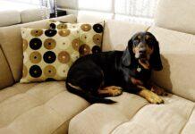 cane che occupa il divano