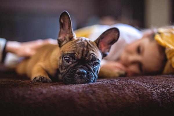 Perché i cani prendono sempre il tuo posto?