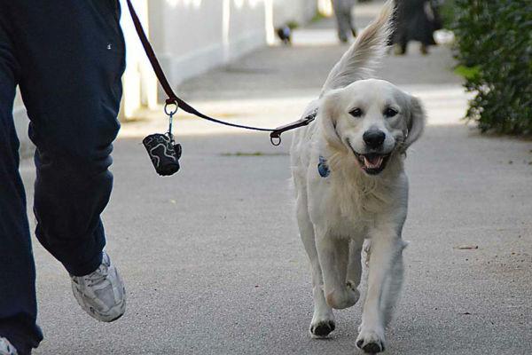cane che cammina