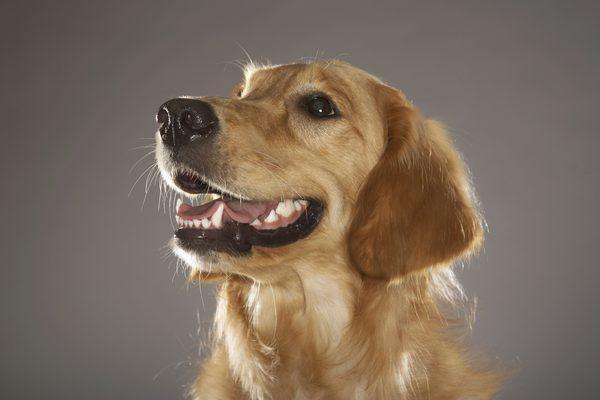 Placca e tartaro nel cane: tre modi per tenerle sotto controllo