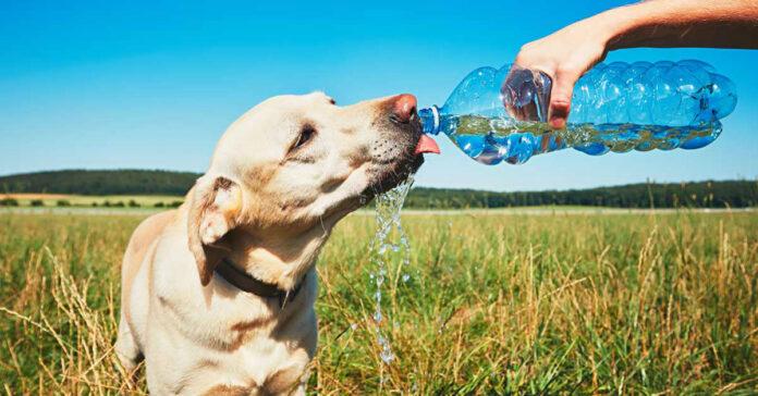 cane beve acqua dalla bottiglia