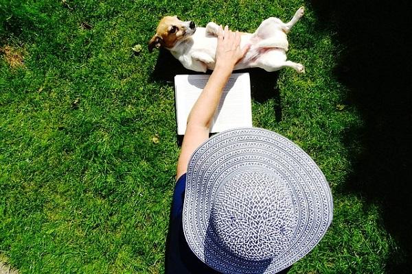 cane jack russel e le coccole