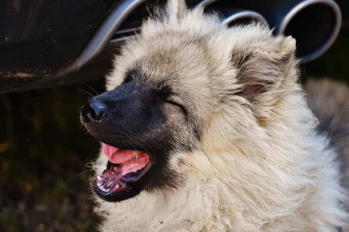 Rimedi tosse cane, naturali e sicuri: ecco i migliori