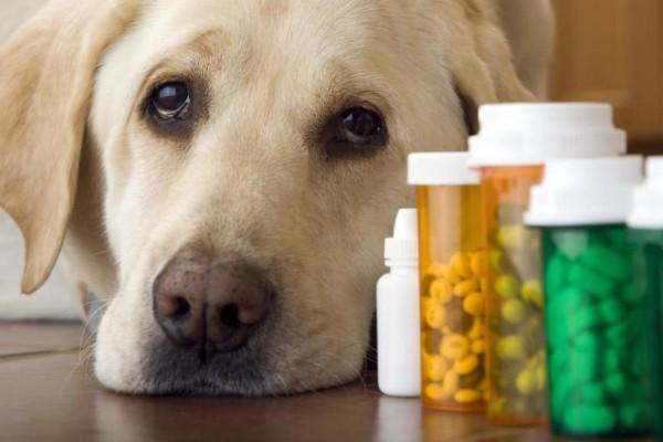 Si può dare l'ibuprofene al cane o è pericoloso?
