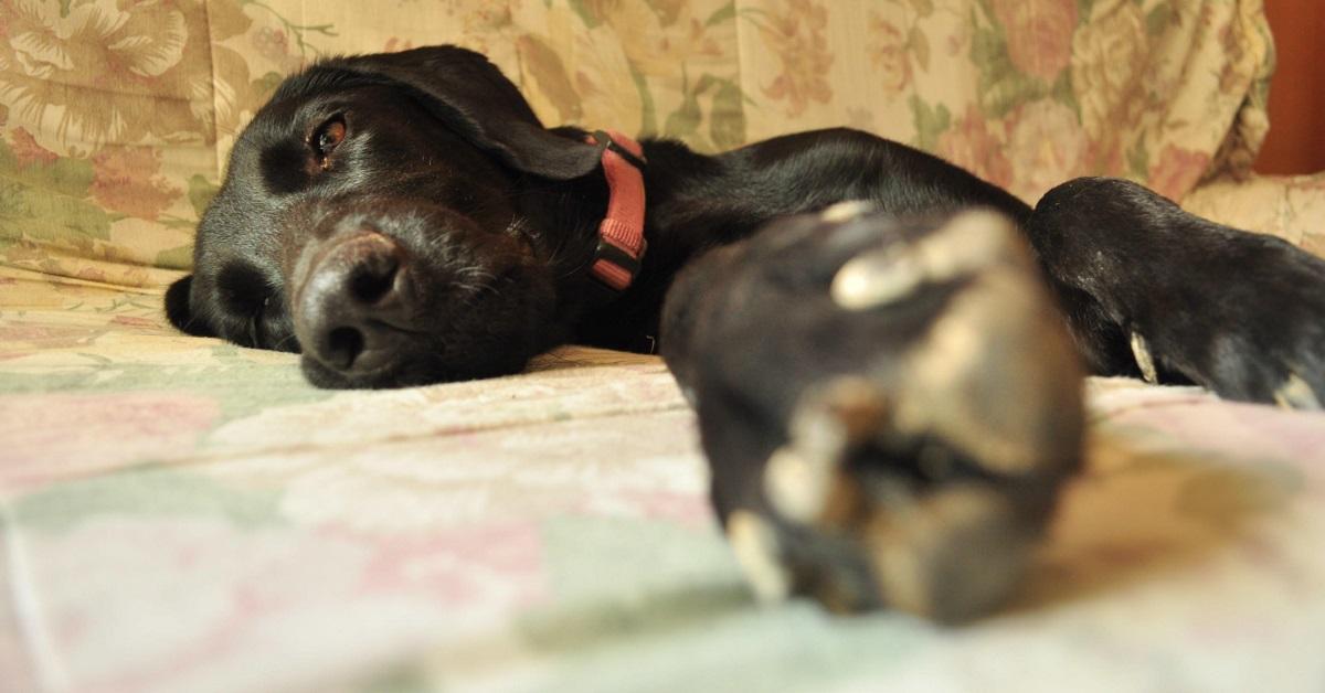 cane su letto