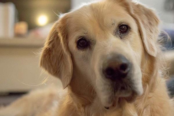 Sindrome di Down nel cane: si può manifestare? E come?