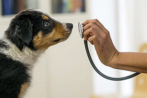 Sterilità nel cane maschio: cosa bisogna fare?