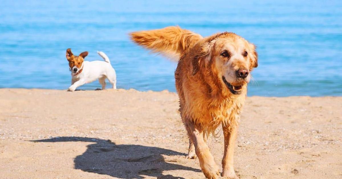 cani corrono sulla spiaggia