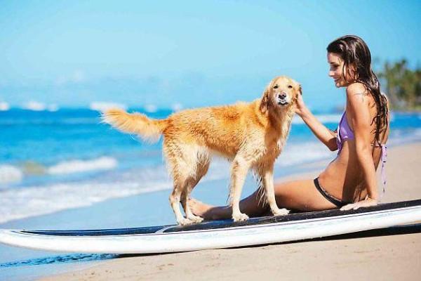 cane con tavola da surf