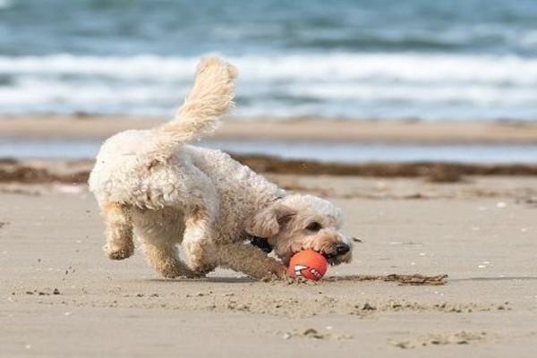 cane gioca in spiaggia