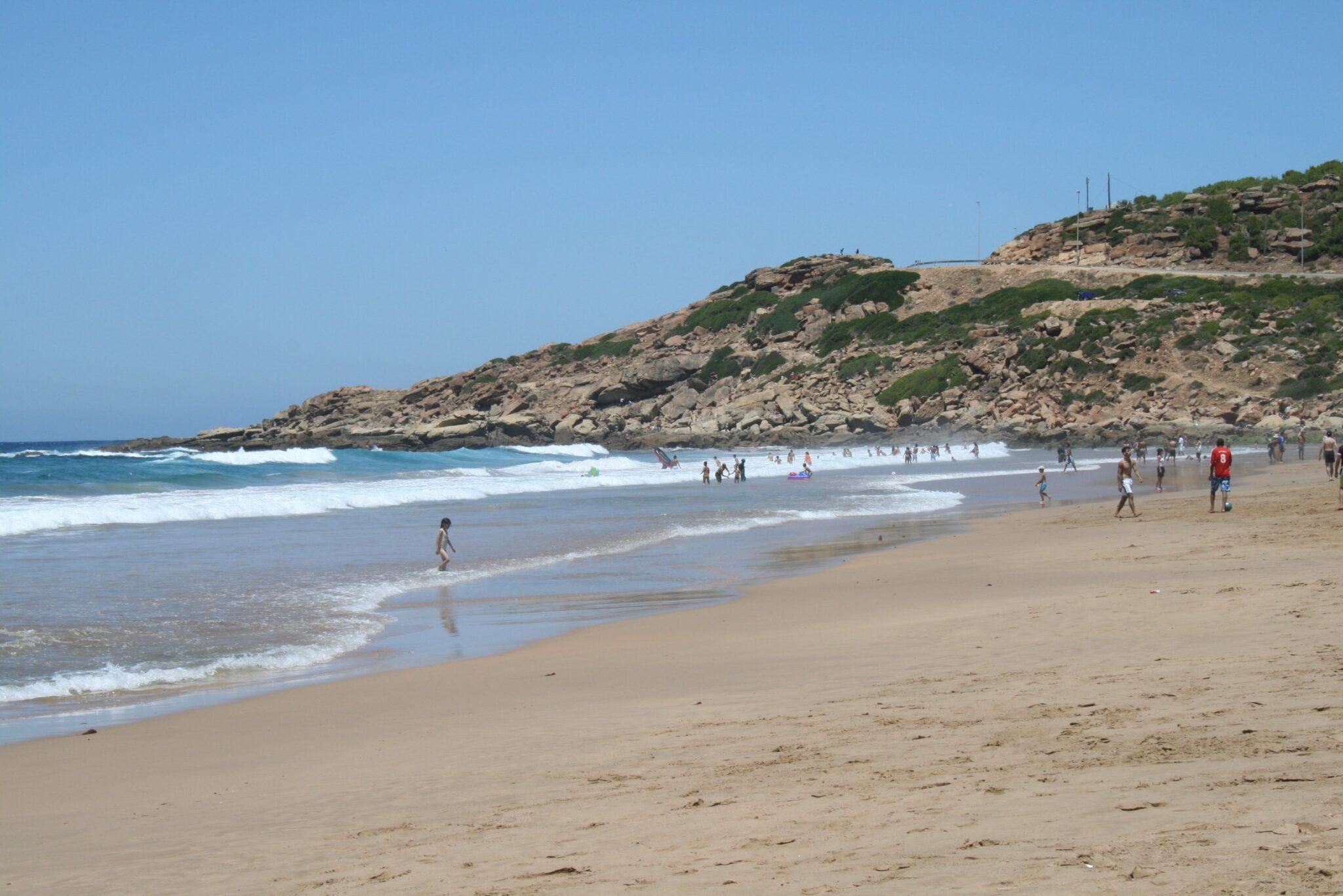 Cani con disabilità tornano a correre felici sulla spiaggia