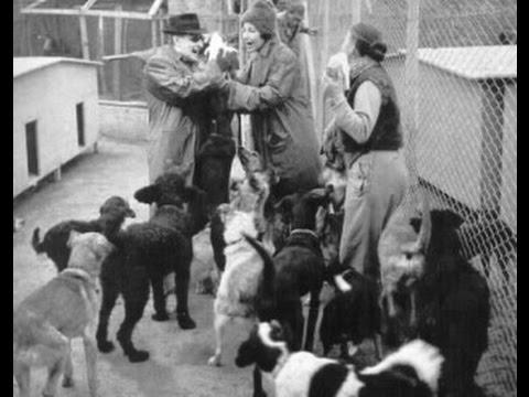 I 220 cani che furono salvati da Totò grazie alla costruzione di un rifugio