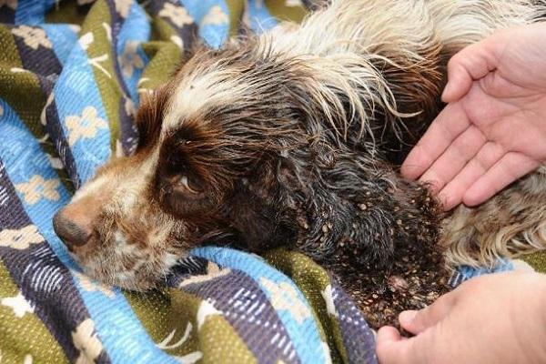 cane sporco e poco curato