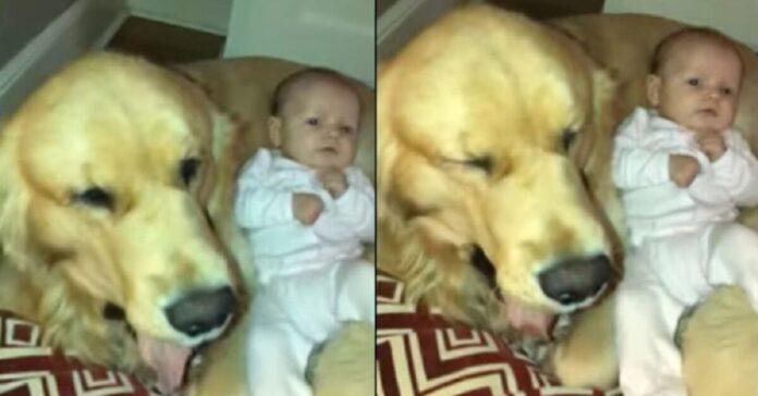 un-cane-ed-un-bambino-in-video-il-web-impazzisce-letteralmente