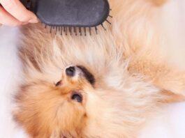 un cane viene spazzolato