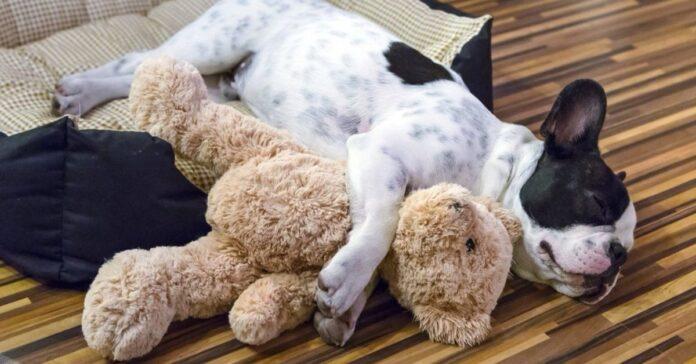 un cane stringe un giocattolo