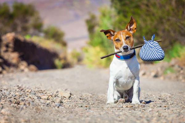 Vacanza con il cane in Liguria: dove andare e cosa fare