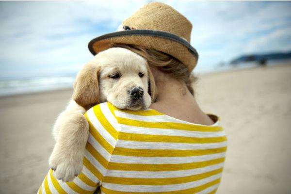 cane che abbraccia umana